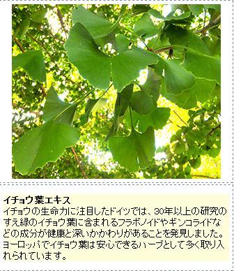 イチョウ葉エキス.jpg